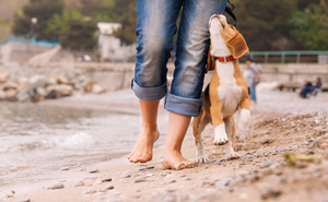 walking with dog on beach